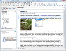 oXygen XML Editor adds Master Files
