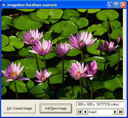 <strong>DataBase of Images</strong>: You are able to display images stored in a database. You can also navigate through them using the next and previous options.<br /><br />
